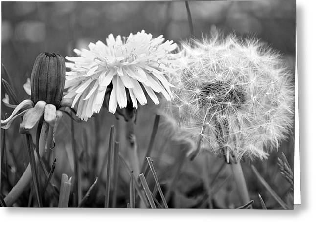 Birth Life Death Greeting Card by Frozen in Time Fine Art Photography