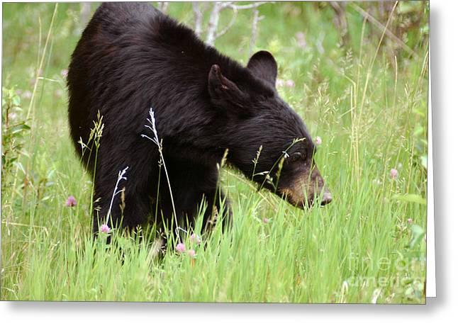 556p Black Bear Greeting Card