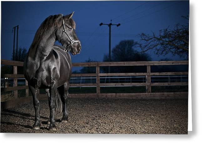 Black Fiesian Horse Greeting Card by Samuel Whitton