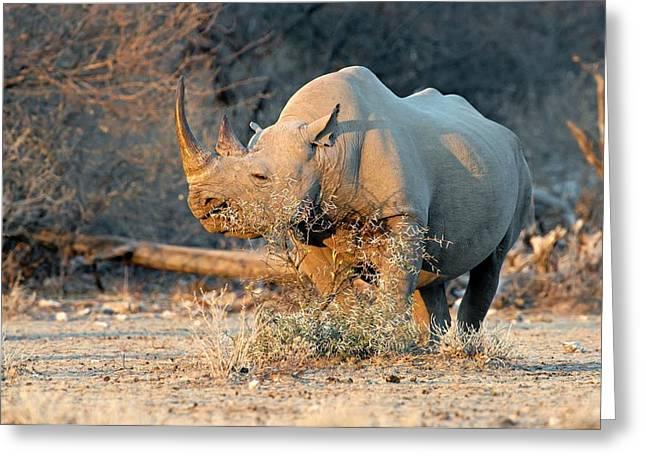 Black Rhinoceros Greeting Card by Tony Camacho