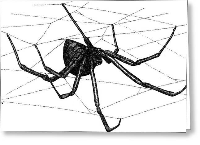 Black Widow Spider Greeting Card by Roger Hall
