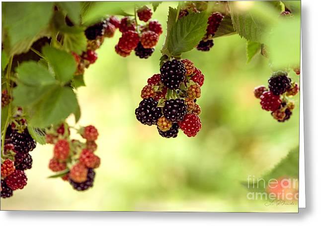 Blackberries Hanging From Bush Greeting Card by Iris Richardson