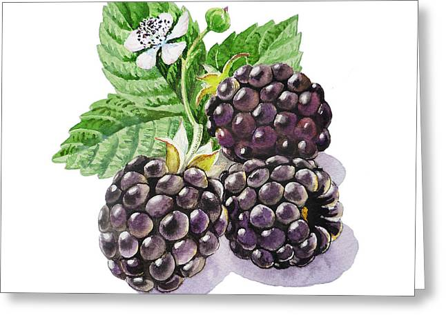 Blackberries Greeting Card by Irina Sztukowski