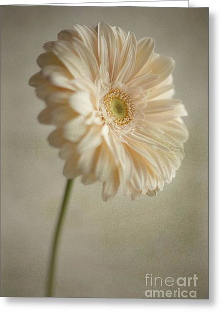 Greeting Card featuring the photograph Blooming by Aiolos Greek Collections
