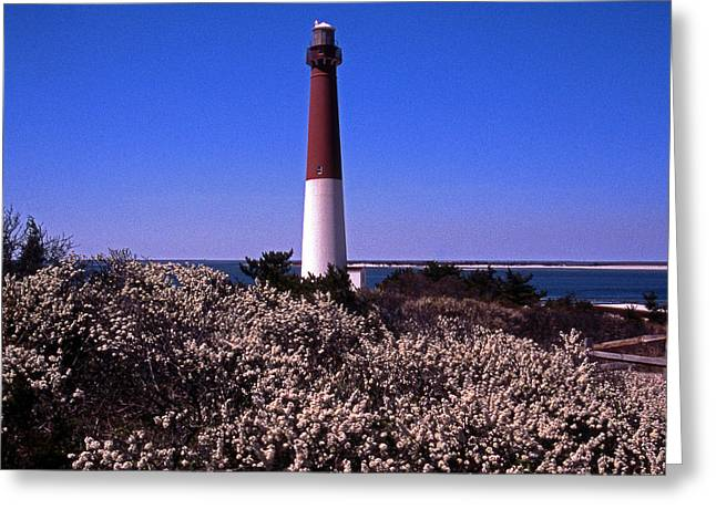 Blooming Barnegat Greeting Card by Skip Willits