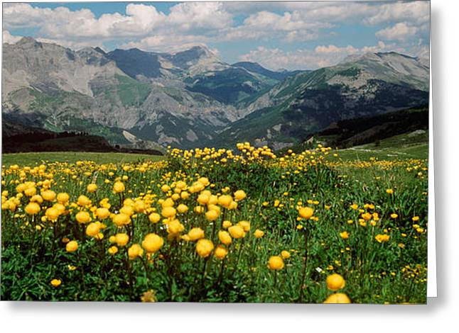 Blooming Buttercup Flowers In A Field Greeting Card