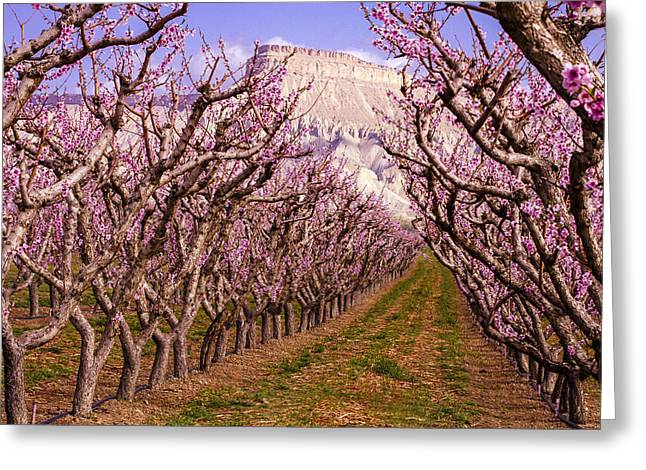 Blooming Peach Orchards In Palisades Co Greeting Card