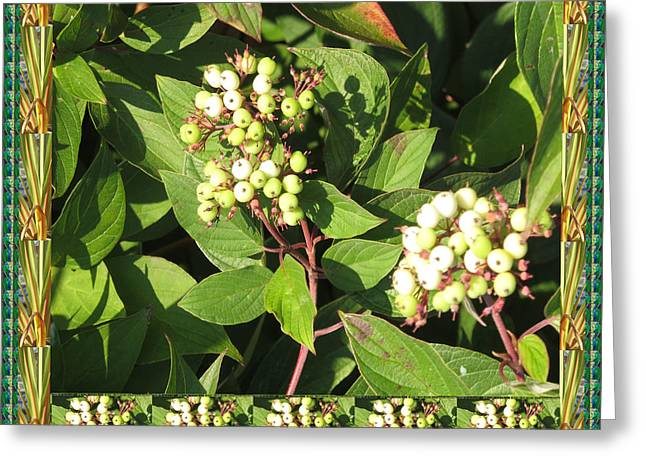 Nature Blossom   Fall Colors In Oakville Ontario Canada  Appreciating Nature It Deserves A Great  Greeting Card