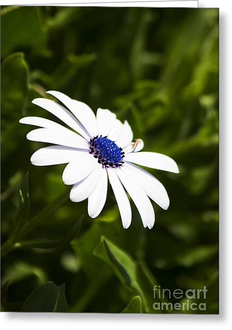 Blossoming Harmony Greeting Card by Jorgo Photography - Wall Art Gallery