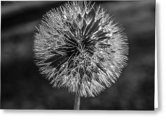Blow Greeting Card by Steven  Taylor