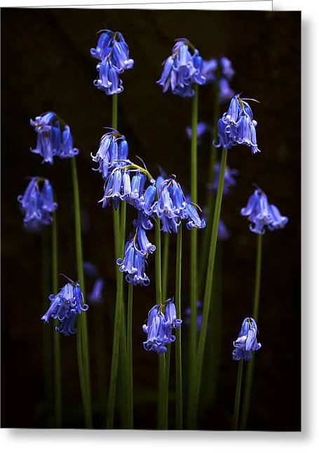 Blue Bells Greeting Card by Svetlana Sewell