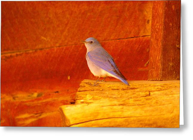 Blue Bird Greeting Card by Jeff Swan