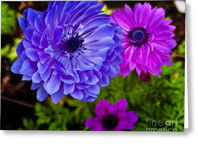 Blue Flower Greeting Card by Michael Fisher