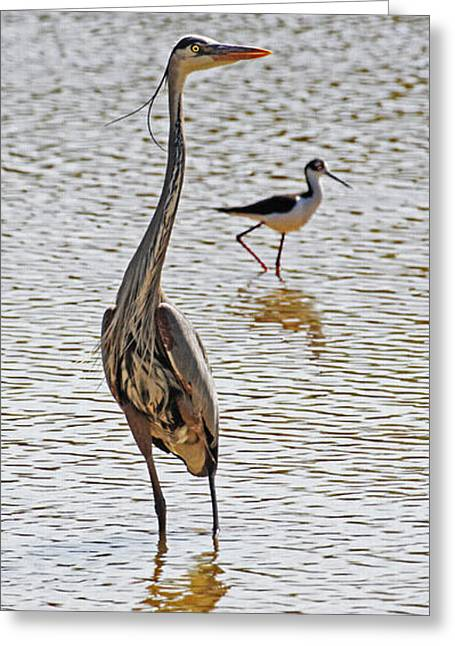 Blue Heron And Stilt Greeting Card