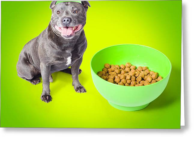 Blue Staffie With His Bowl Of Food Greeting Card