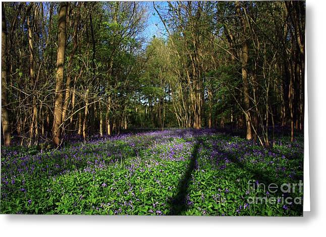 Greeting Card featuring the photograph Bluebells by Jeremy Hayden