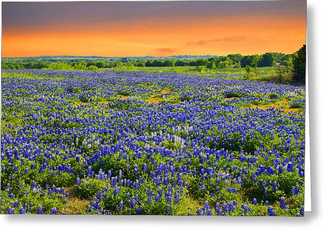 Bluebonnet Sunset  Greeting Card