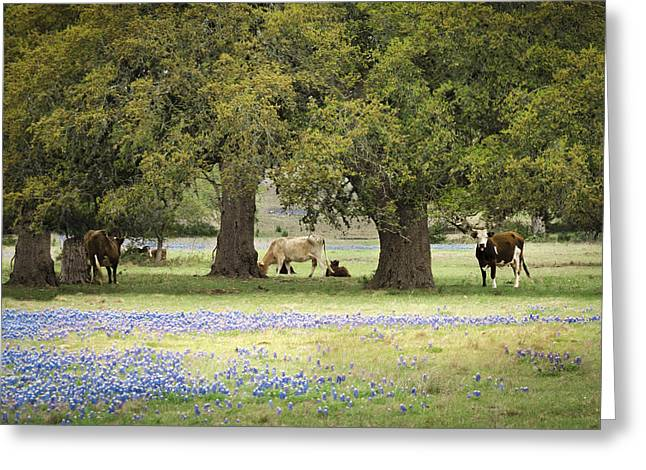 Bluebonnets And Bovines Greeting Card by Debbie Karnes