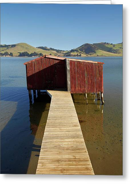 Boat Shed, Hoopers Inlet, Otago Greeting Card by David Wall