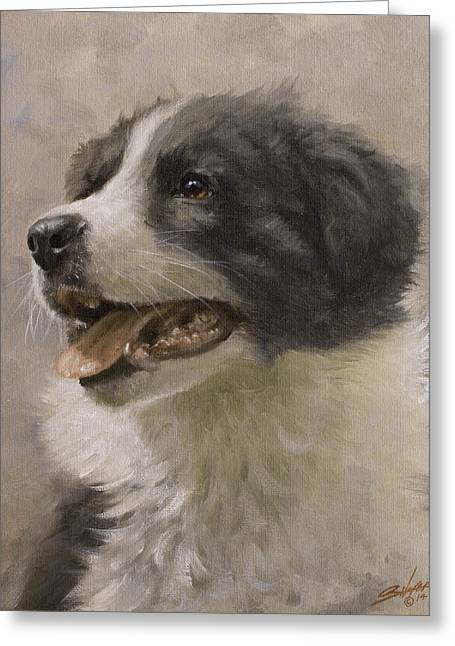 Border Collie Pup Portrait IIi Greeting Card by John Silver