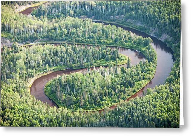 Boreal Forest In Northern Alberta Greeting Card by Ashley Cooper