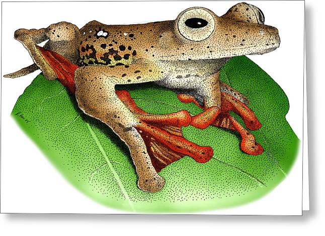 Borneo Red Flying Frog Greeting Card by Roger Hall