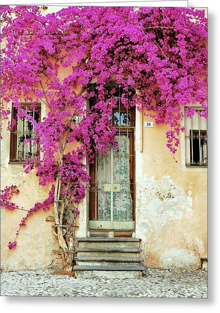 Bougainvillea Doorway Greeting Card