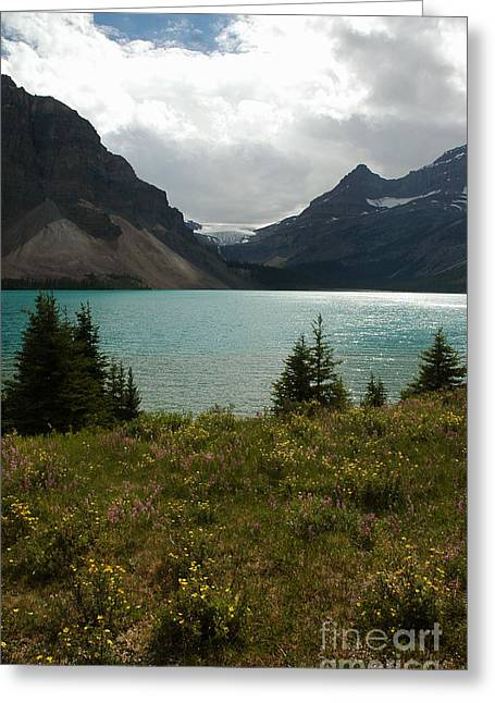 1010a Bow Lake Alberta Greeting Card