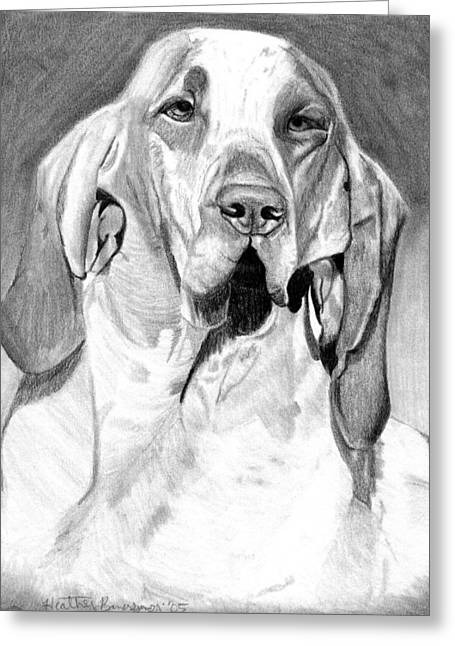 Bracco Italiano Dog Portrait Greeting Card by Olde Time  Mercantile