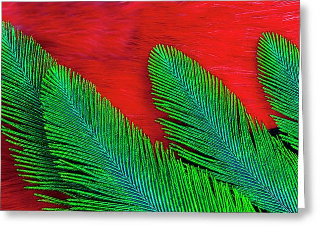 Breast And Wing Feather Design Greeting Card by Darrell Gulin