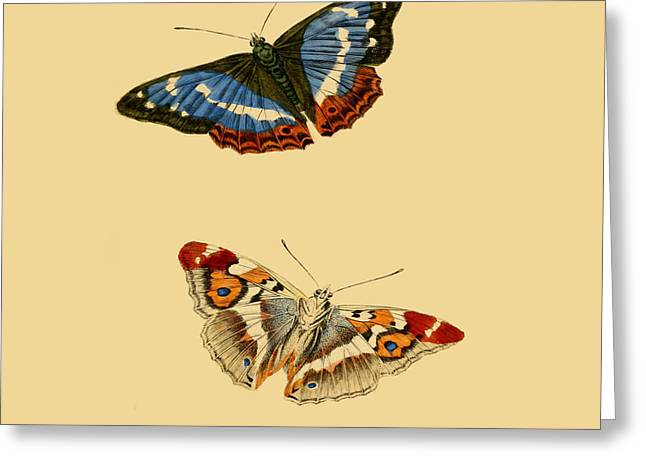 British Butterflies Greeting Card