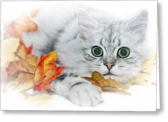 British Longhair Cat Greeting Card by Melanie Viola