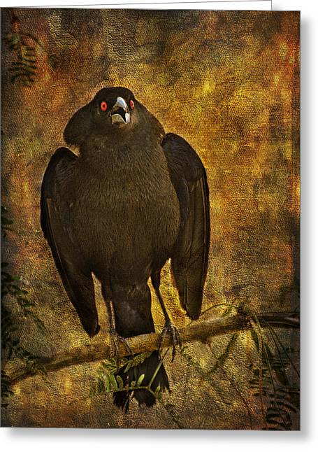 Bronzed Cowbird Greeting Card
