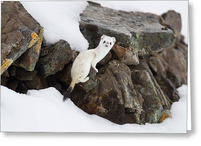 Brooks Range, Arctic National Wildlife Greeting Card