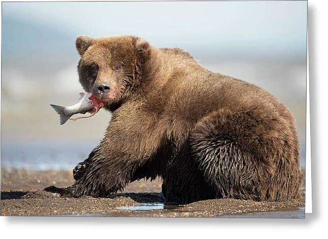 Brown Bear Greeting Card by Dr P. Marazzi