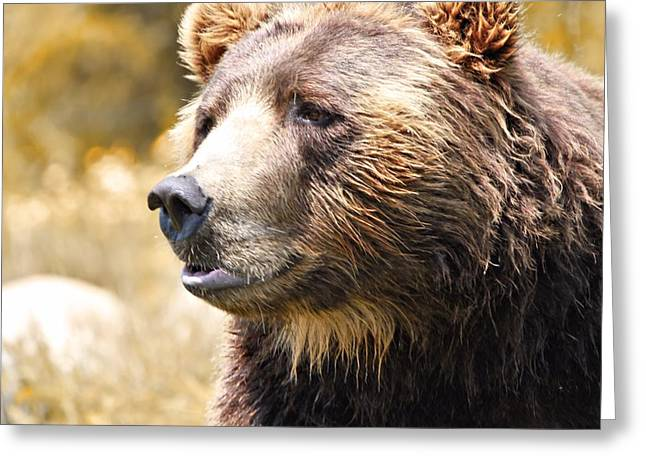 Brown Bear Portrait In Autumn Greeting Card