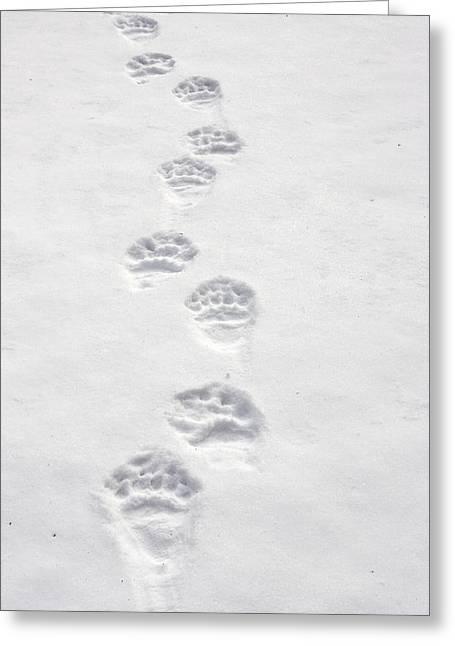 Brown Bear Tracks Greeting Card