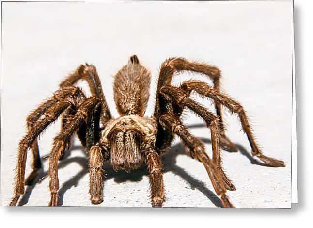 Brown Tarantula Greeting Card by Robert Bales