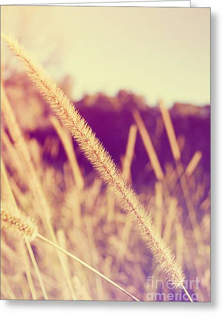 Brush Grass Greeting Card by Jorgo Photography - Wall Art Gallery