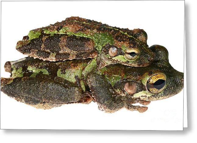 Buckley Bonehead Frogs Mating Greeting Card