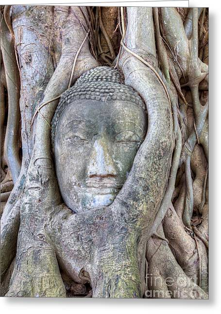 Buddha Head In Tree Greeting Card by Fototrav Print