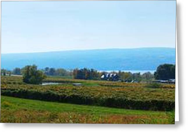 Bull Horn Creek Farm Wineyard New York Panoramic Photography Greeting Card by Paul Ge