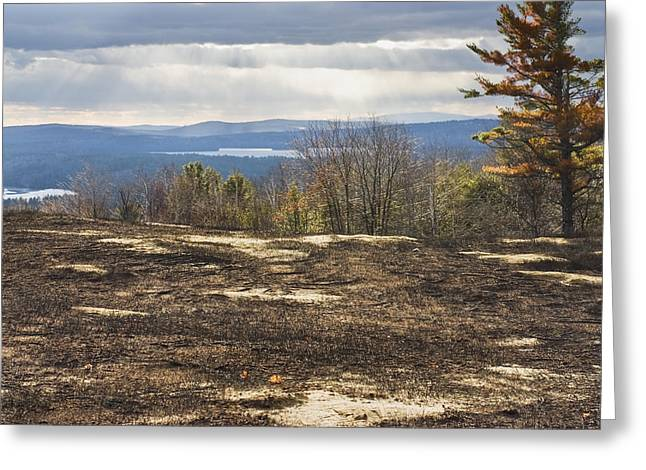 Burnt Blueberry Field In Maine Greeting Card