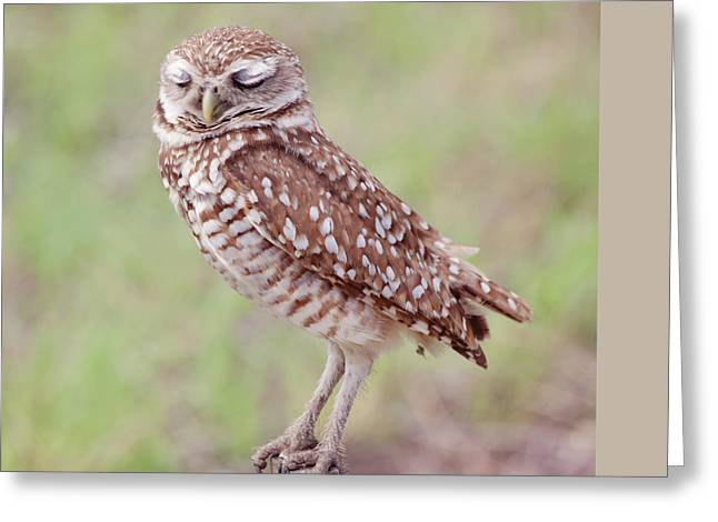 Burrowing Owl  Greeting Card by Kim Hojnacki