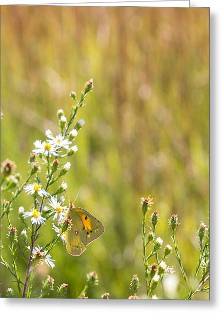 Butterfly In A Field Of Flowers Greeting Card