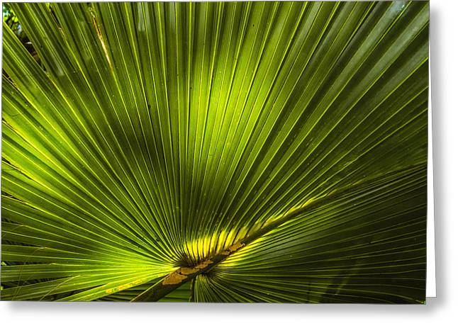 Cabbage Palm Greeting Card by Rich Leighton