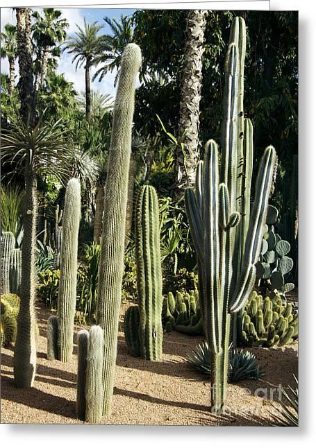 Cacti Garden Greeting Card