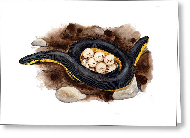 Caecilian Greeting Card