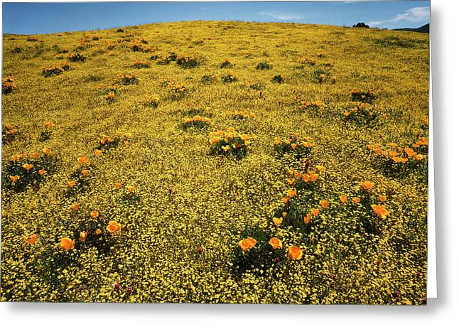 California, Cleveland National Forest Greeting Card