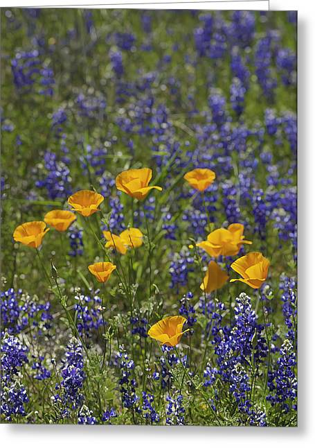 Greeting Card featuring the photograph California Poppies And Lupine by Sherri Meyer
